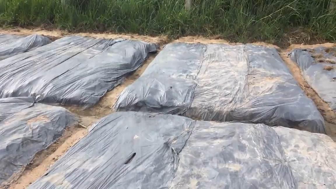 diệt cỏ bằng che phủ