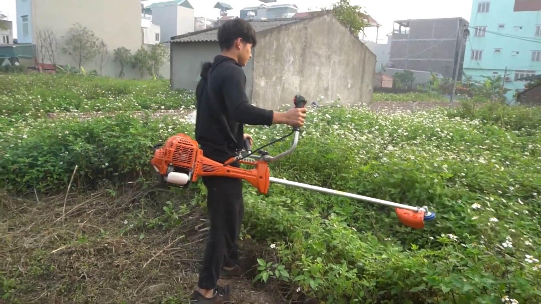 diệt cỏ cho vườn cây ăn trái